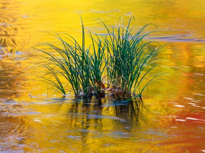 Reflections of fall - www.nice-cool-pics.com